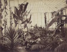 Invernadero del Parque de la Exposición antes de ser desmantelado por el ejército chileno en 1881. Crédito: Fotografía de E. Courret, 1872. Museo de Arte de Lima.