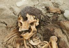"""Restos de uno de """"los telas"""": los caídos en el Cerco de Lima (Puruchuco), en 1536. Son llamados así por los arqueólogos de hoy debido a su descuidada forma de entierro. Crédito: Fotografía de Willy Cock."""
